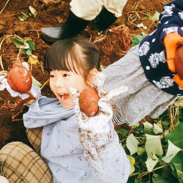 チャイスタ☆サツマイモ掘り収穫祭!!