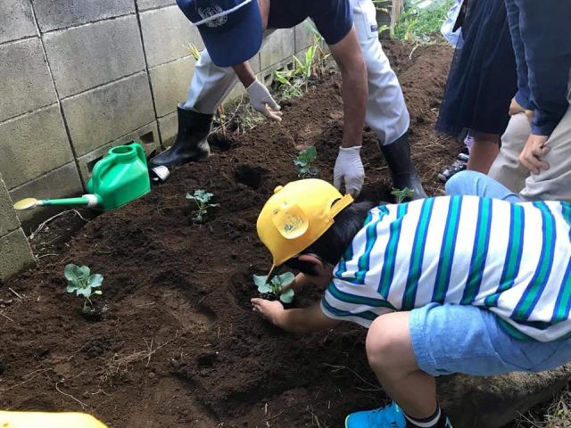 チャイスタ☆畑に冬野菜を植えました!!
